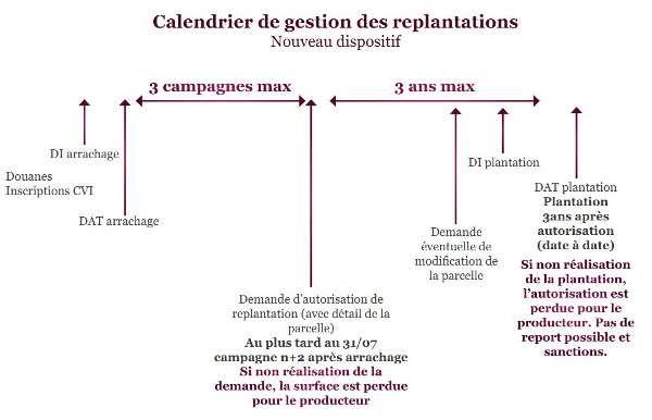 Travaux Vigne Calendrier.Les Autorisations De Plantation Le Nouveau Regime